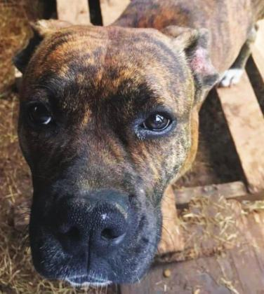 Brin, pictured above with her face so full of hope, is just one of the many animals that the Union Humane Society rescued in 2020. The Union Humane Society rescued 638 neglected and homeless animals last year. Submitted photo